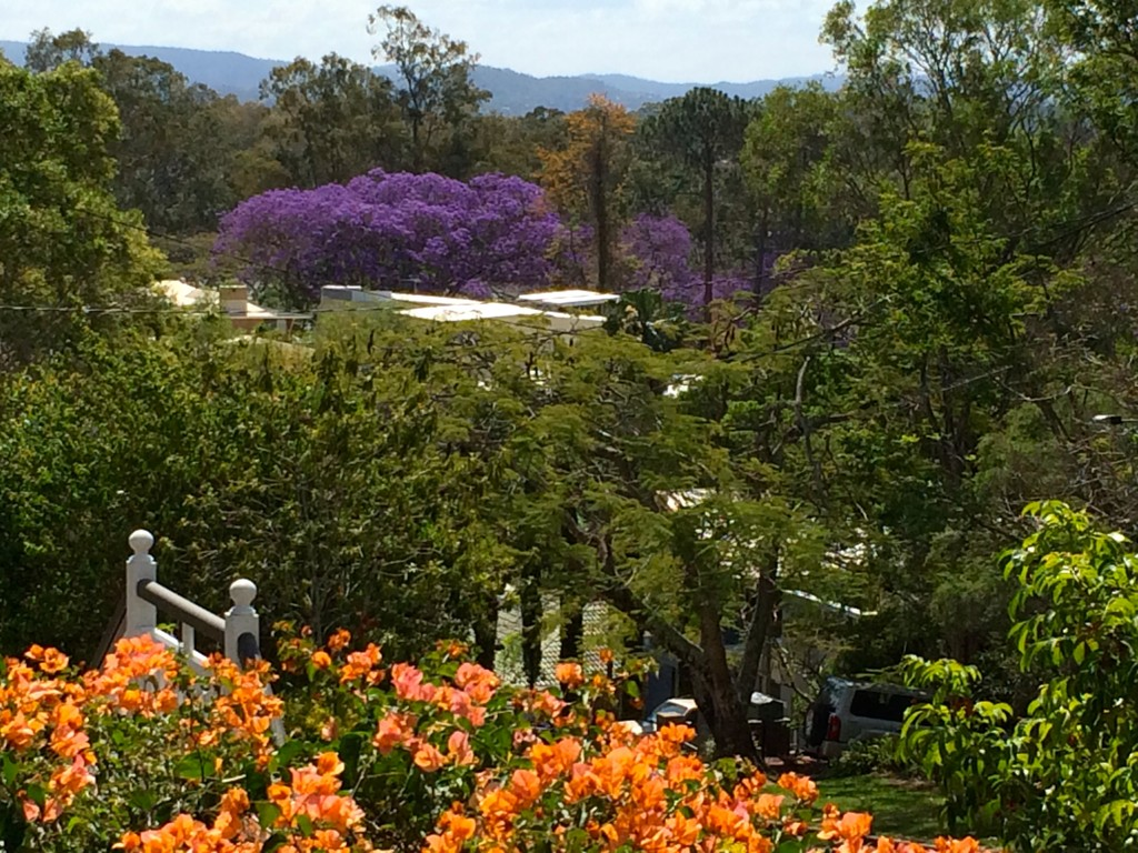 Jacaranda view from balcony rectangular