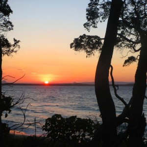 sunset on ocean behind trees square