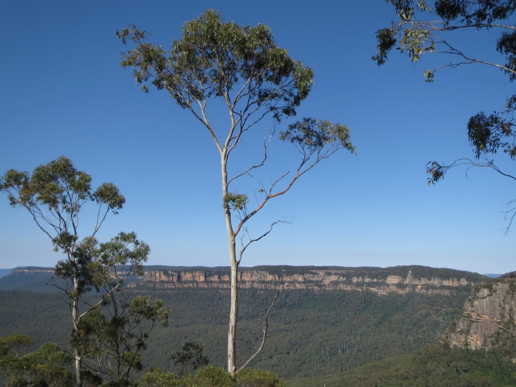 View From Blue Mountains